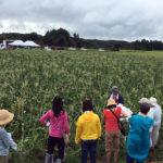 フードキャンプ トウモロコシ畑にて
