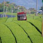 三重県かぶせ茶の生産地